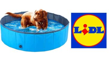 Lidl Piscine gonflable chiens